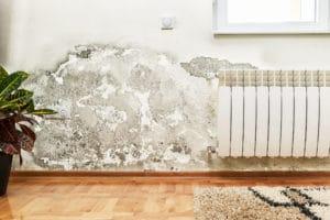 jak řešit odstranění plísně v Brno-Řečkovice