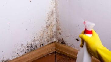 jak bojovat s plísní v bytě Brno-Lesná