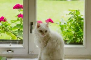 péče o okna