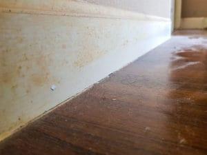 odstranění plísně z nábytku