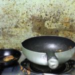 Proč v domácnosti vznikají plísně