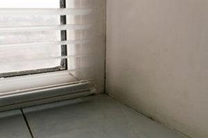 plísně u oken