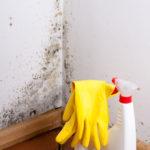 Odstranění plísně doma
