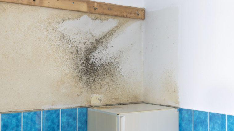 jak vyčistit plíseň v koupelně